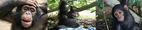going_ape_2