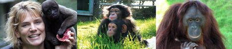 monkey_life_3