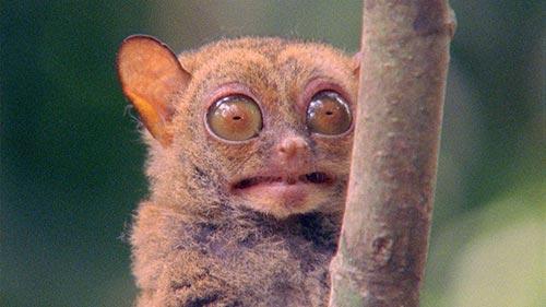 World's Weirdest Animal Faces