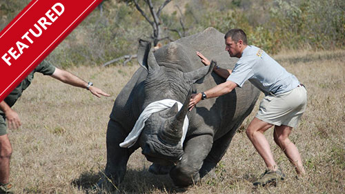 Wildlife Rescue Africa