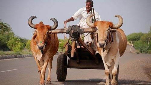 Voetspore: Indië