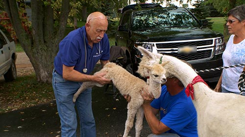 The Incredible Dr. Pol 8