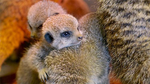 Wonderful World of Baby Animals