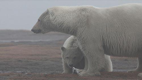 Wild Alaska: Arctic Summer