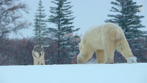 Wild Life: The Big Freeze