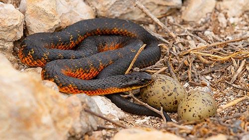 Snake Island: Wild & Deadly