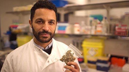 Cannabis: Miracle Medicine or Dangerous Drug?
