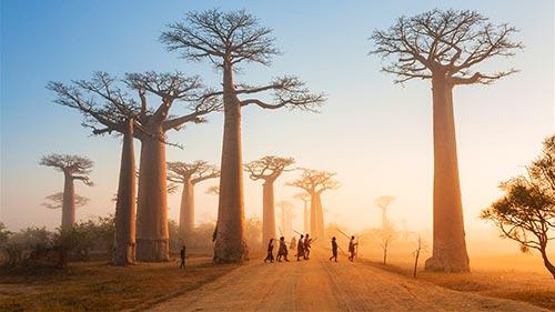 Voetspore 9: Madagaskar