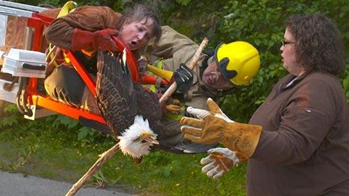 Alaska Animal Rescue