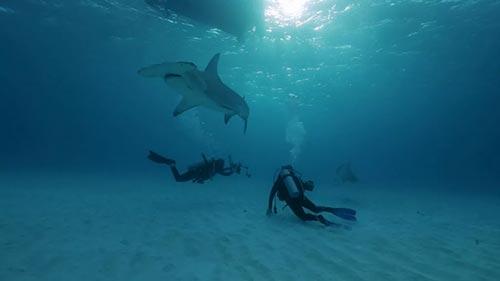 Monster Fish: Extreme Sharks
