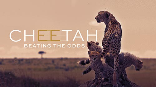 Cheetah: Beating the Odds