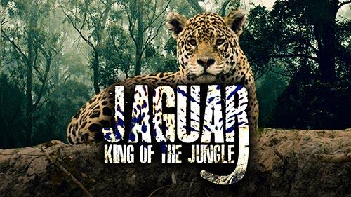 Jaguar: King of the Jungle