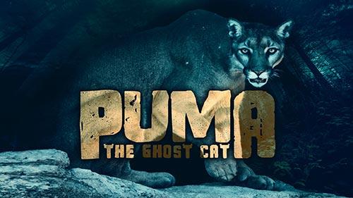 Puma: The Ghost Cat