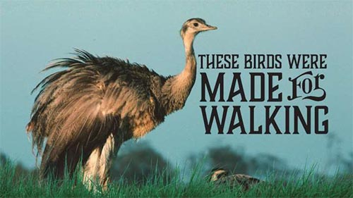 These Birds were Made for Walking