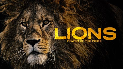 Lions - Power of the Pride