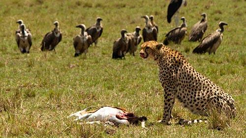 Serengeti Speed Queen