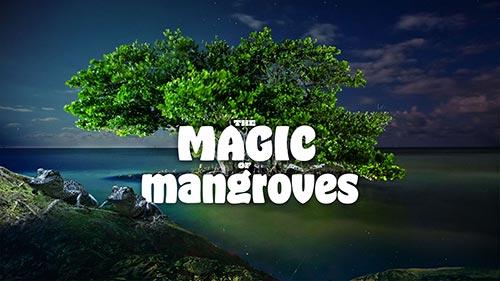 The Magic of Mangroves