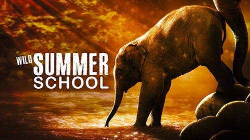 Wild Summer School