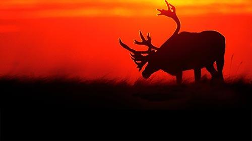 Mark Emery's American Wildlife