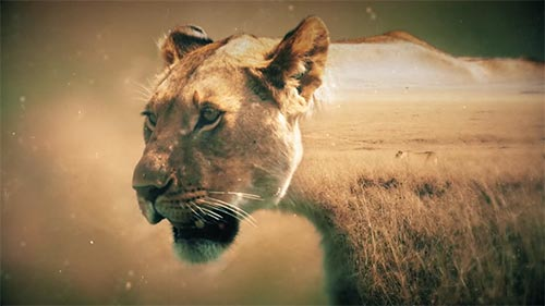 Lions: The Hunt for Survival
