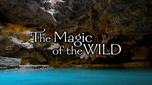 The Magic of the Wild