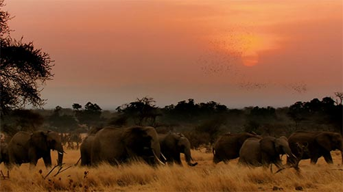 Migrations: Herds on the Move
