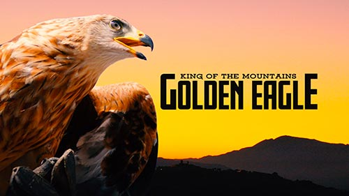 King of the Mountains: Golden Eagle