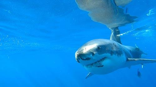 Shark Attacktics