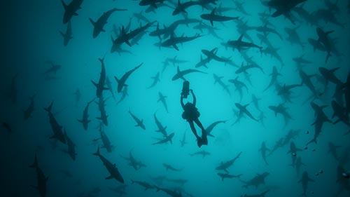50 Shades of Sharks