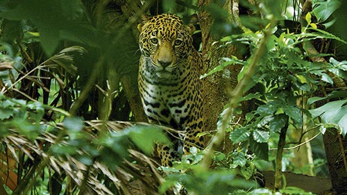 Costa Rica: The Rise of Nature